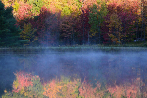 a foggy pond in the fall in the forest